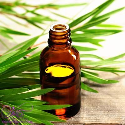 روغن درخت چای اصل - دکاموند شیمی